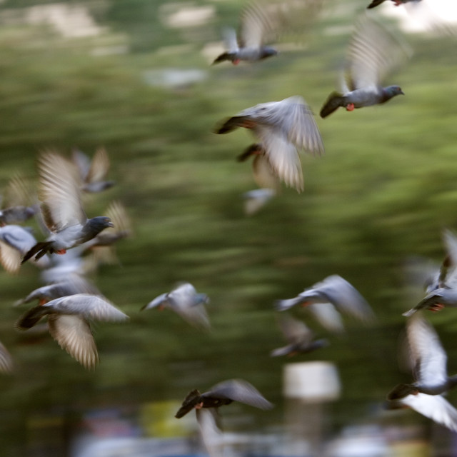 """Pigeons in the park, Bangkok, Thailand. January 16, 2007."" stock image"