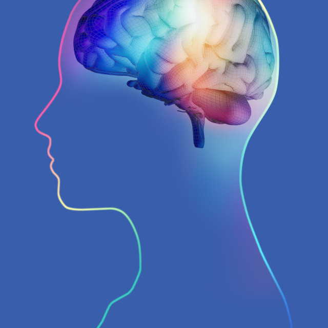"""Human brain, artwork"" stock image"