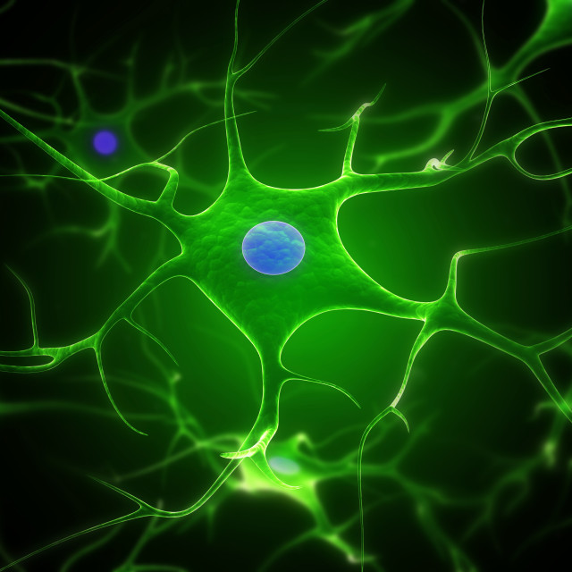 """Nerve cells, artwork"" stock image"