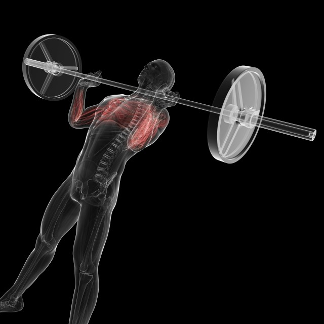 """Weightlifter, artwork"" stock image"