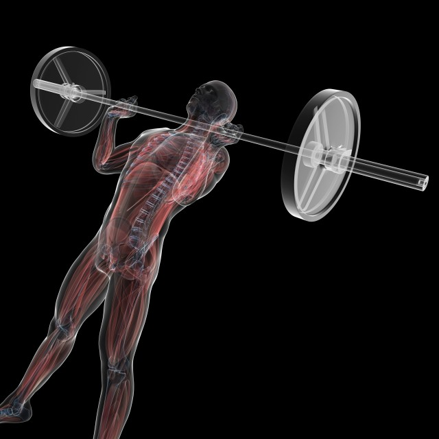 """Weightlifting, artwork"" stock image"