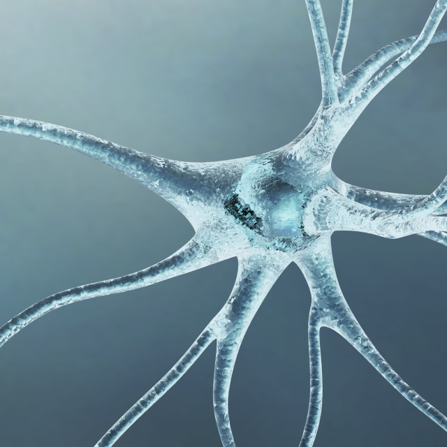 """neuron_11957_3.tif"" stock image"