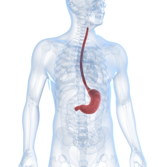 """""""Healthy stomach, artwork"""" stock image"""