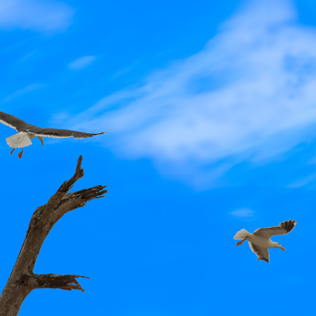"""Gliding to perch"" stock image"