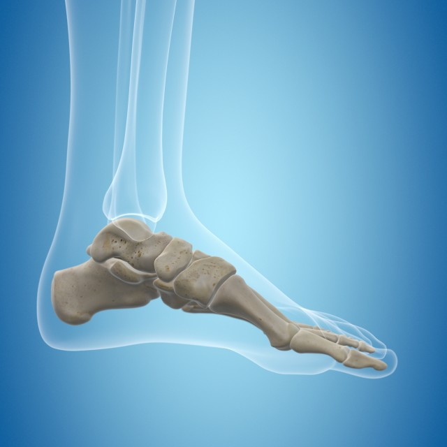 """Human foot bones, artwork"" stock image"