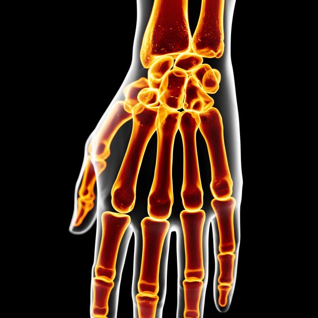 """Human hand bones, artwork"" stock image"