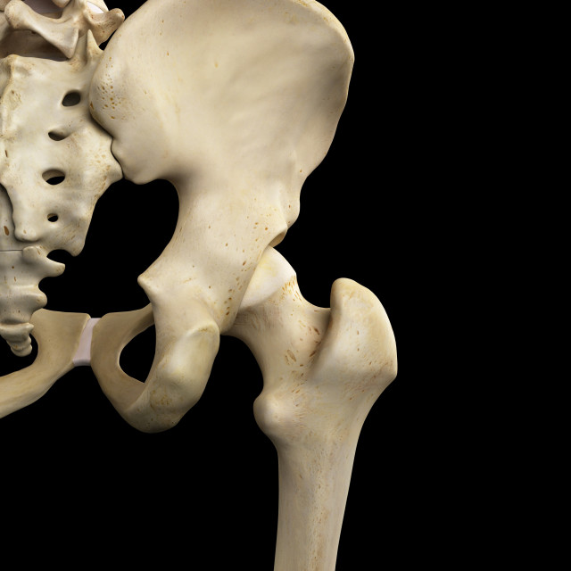 """Human hip bone, artwork"" stock image"