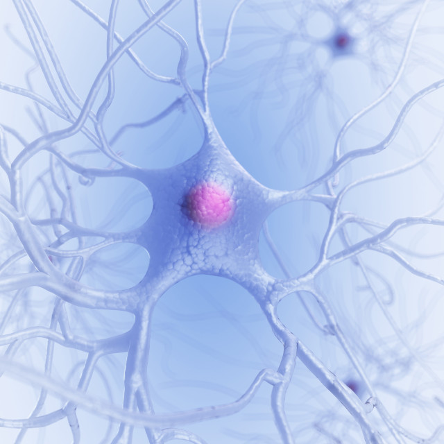 """Human nerve cell, artwork"" stock image"