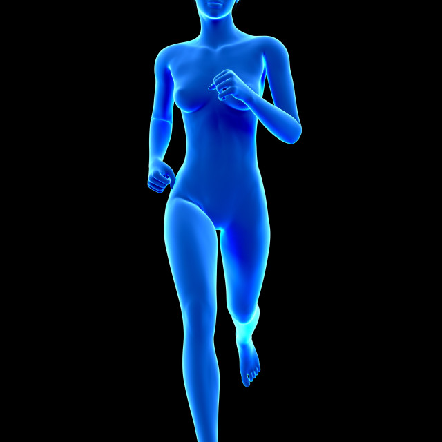 """Anatomy of runner, illustration"" stock image"