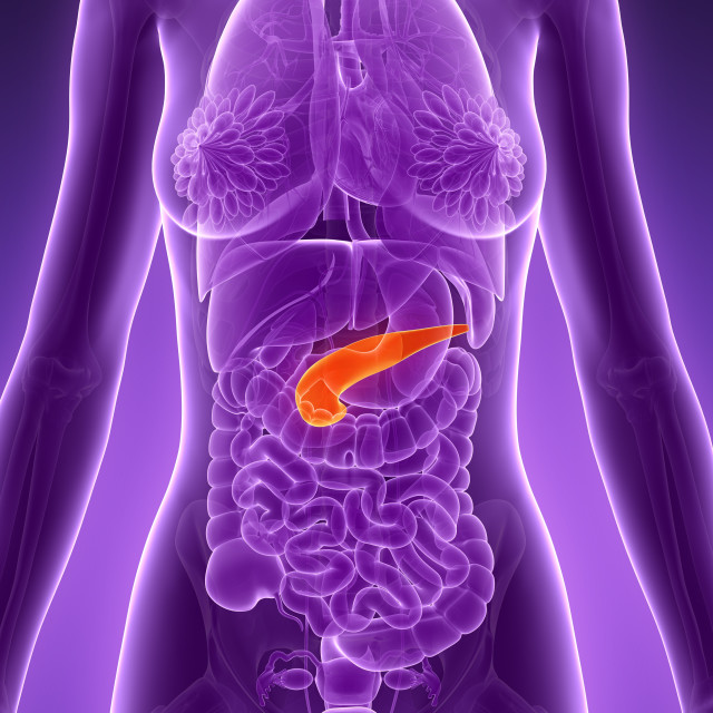 """Anatomy of female pancreas, illustration"" stock image"