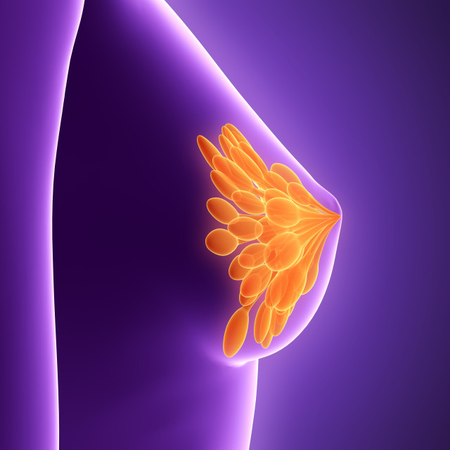 """Anatomy of female breast, illustration"" stock image"