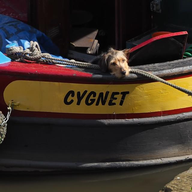 """""""Barge Dog"""" stock image"""