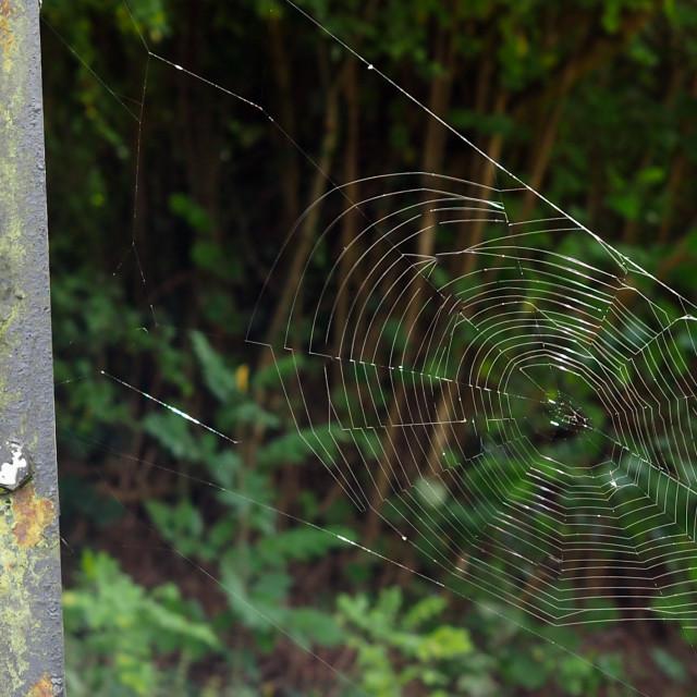 """Web and Wheel"" stock image"