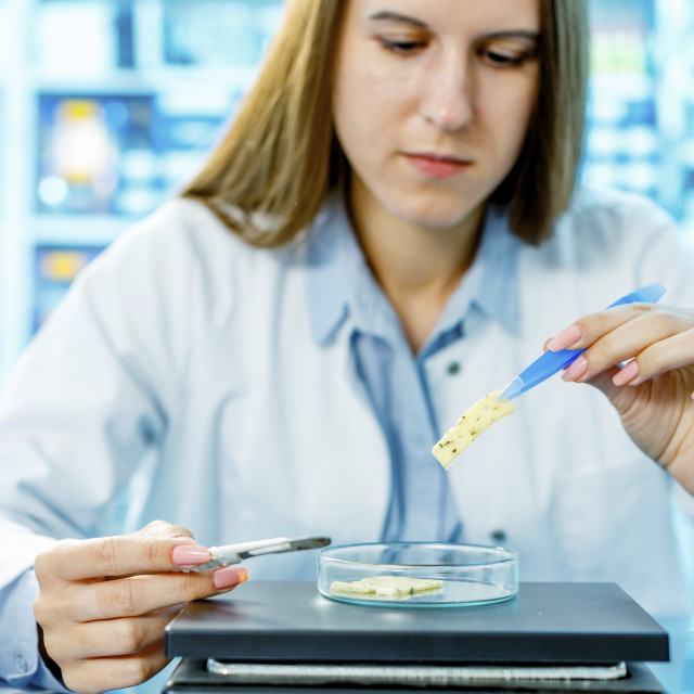 """Scientist testing cheese sample"" stock image"