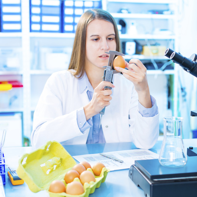 """Scientist testing an egg in a lab"" stock image"