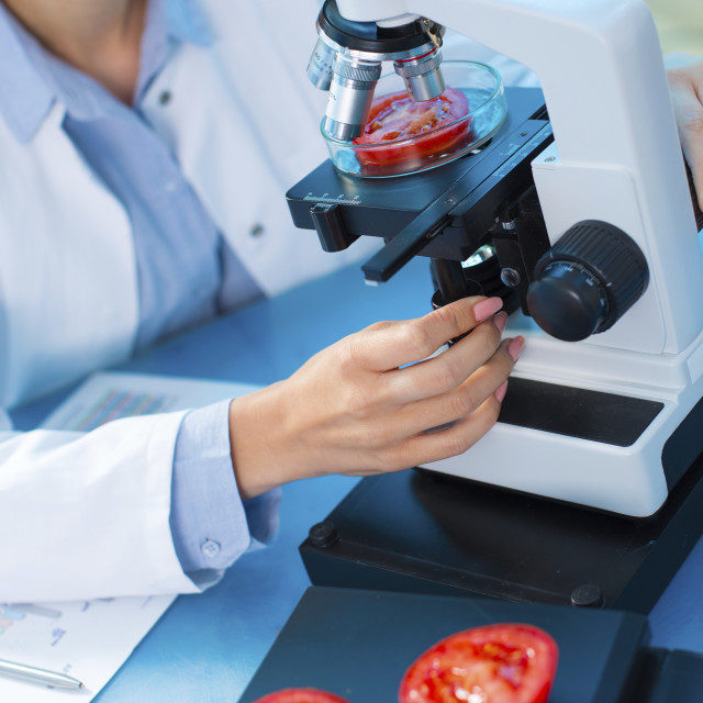 """Scientist studying tomato in a petri dish"" stock image"