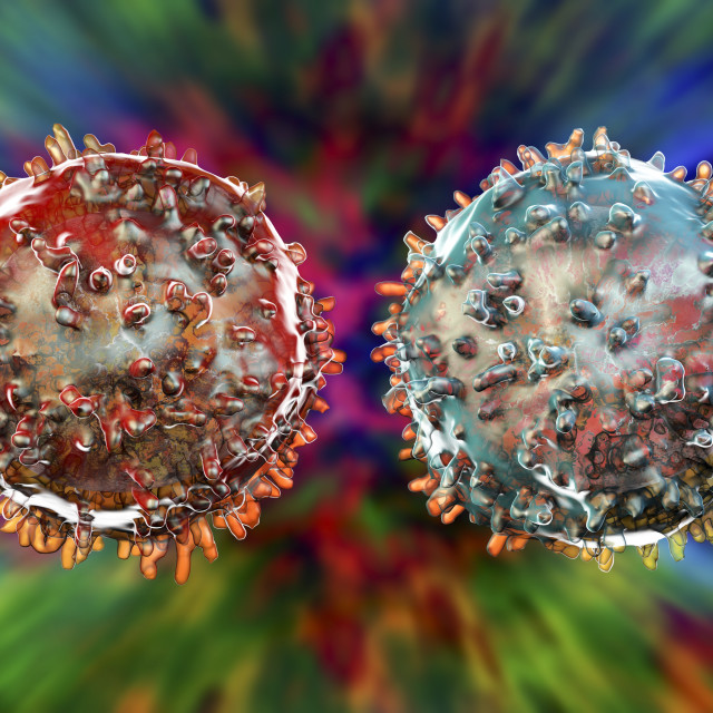 """T- and B-lymphocyte, illustration"" stock image"