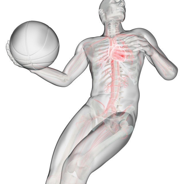 """Anatomy of a basketball player, illustration"" stock image"