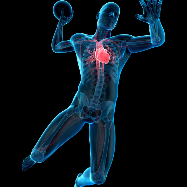 """Anatomy of handball player, illustration"" stock image"
