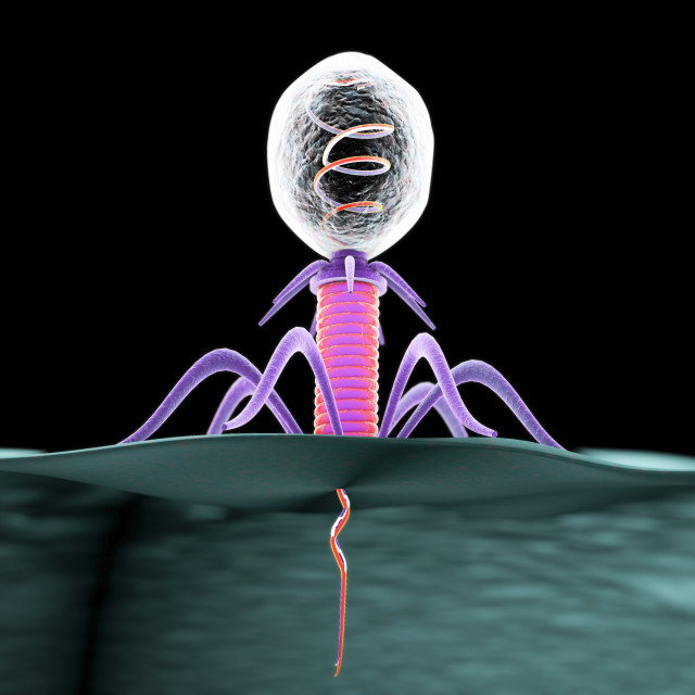 """Bacteriophage, illustration"" stock image"