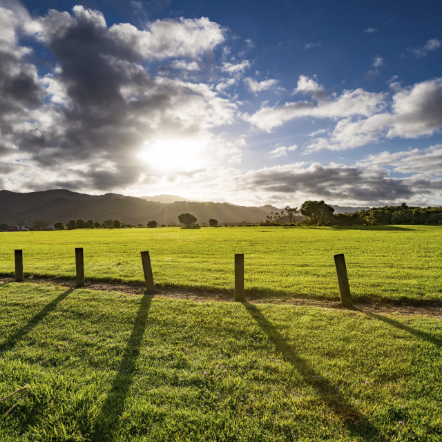 """""""Green field with wooden posts"""" stock image"""