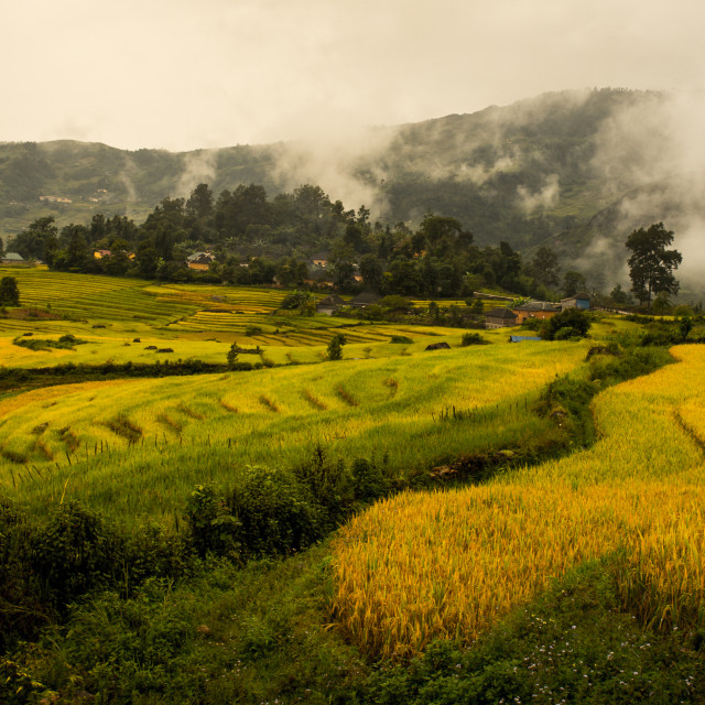 """Terraced fields in Lao Cai, Vietnam"" stock image"