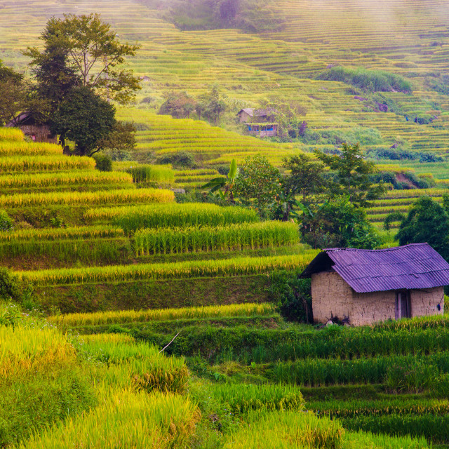 """""""View of Terraced rice field, Vietnam"""" stock image"""