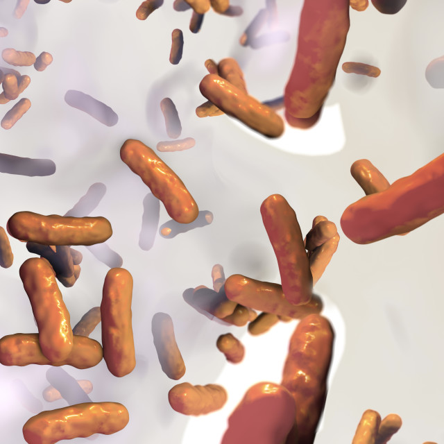 """Pseudomonas aeruginosa bacteria, illustration"" stock image"