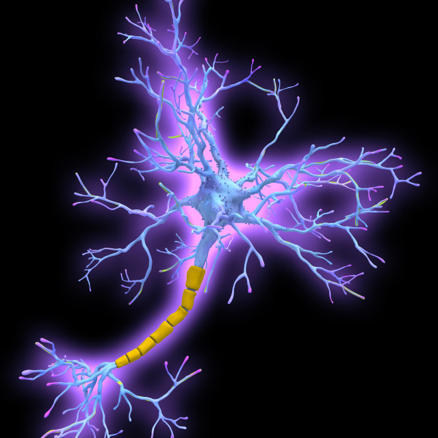 """Neuron, illustration"" stock image"
