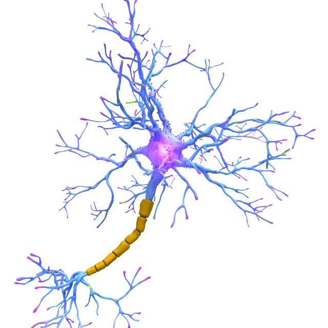 """Neuron, artwork"" stock image"