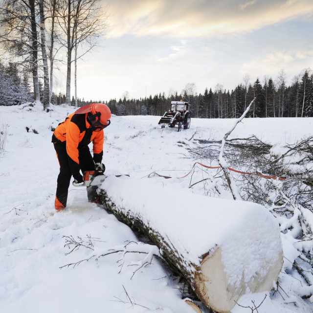 """""""Lumberjack cutting log with chainsaw in winter"""" stock image"""