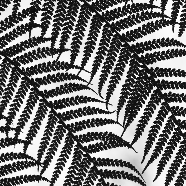 """""""Black and White Ferns"""" stock image"""