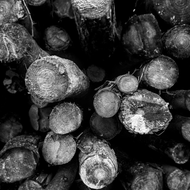 """""""Pile of logs"""" stock image"""
