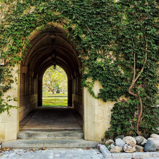 """""""Ivy Tunnel"""" stock image"""