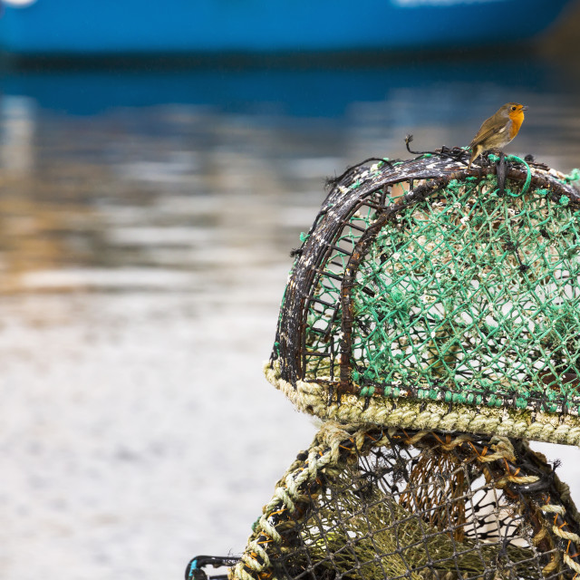 """""""Orange Head And Breasted Bird On Top Of Lobster/Crab Traps With Blue Boat..."""" stock image"""
