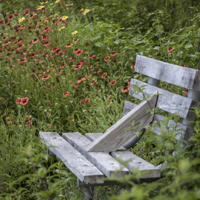 """Isolated Bench among Daisies"" stock image"