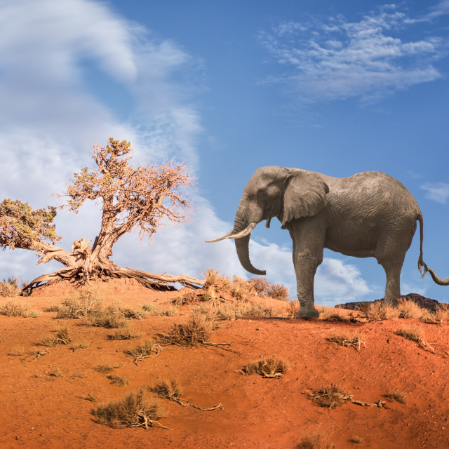 """Elephants on Parade - Part 2"" stock image"