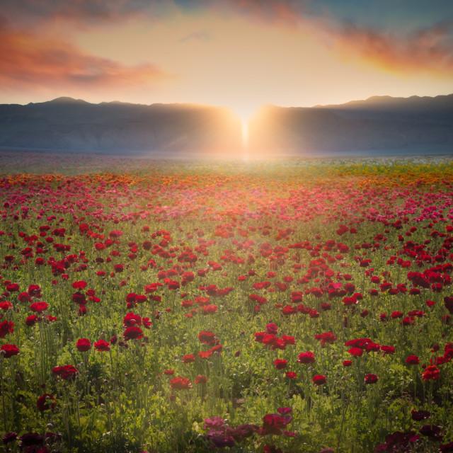 """""""Fields of Splendor"""" stock image"""