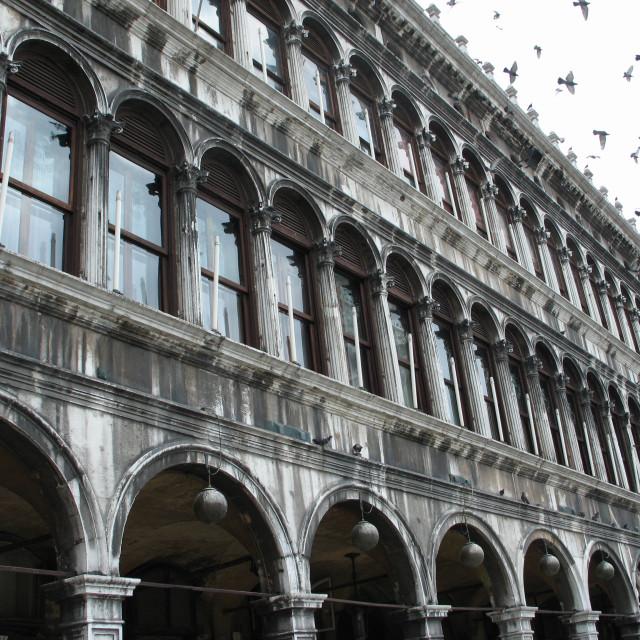 """Pigeons in St. Mark's Square, Venice"" stock image"