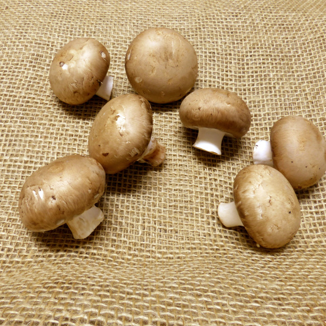 """""""Group of brown champignons on jute"""" stock image"""