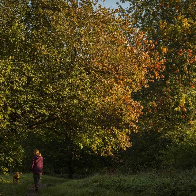 """Autumn colours dog walk"" stock image"