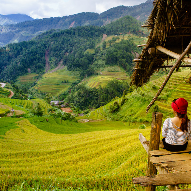 """Explore the natural beauty of Northwest Vietnam. Terrace field with the different type of seeds makes a beautiful colorful picture."" stock image"