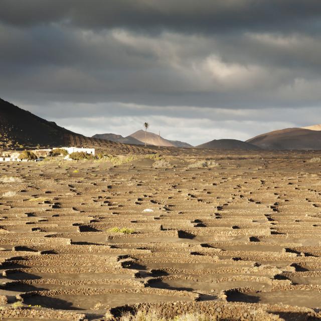 """""""La Geria, Lanzarote, Canary Islands, Spain"""" stock image"""