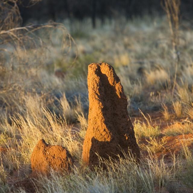"""""""Termite mound at Simpson's Gap, West Madonnell Mountain Range, Australia"""" stock image"""