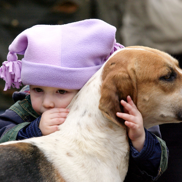 """A toddler crying whilst embracing a foxhound before the Heythrop New Year's..."" stock image"