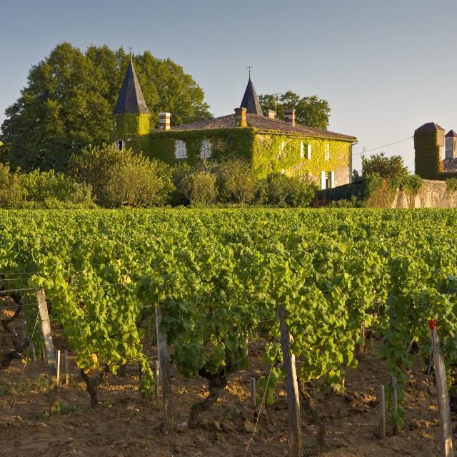 """""""Chateau Coutet, Barsac region, Bordeaux, France."""" stock image"""