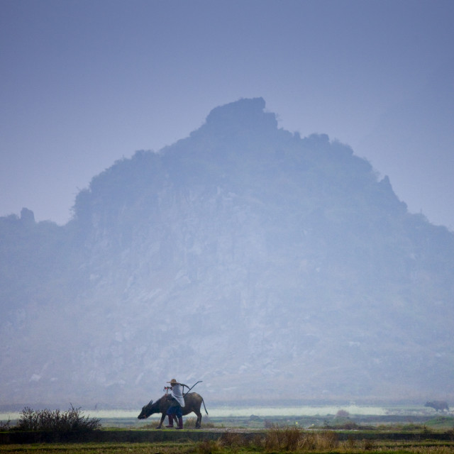 """Farmer uses a buffalo to pull plough through a crop field near Fuli,..."" stock image"