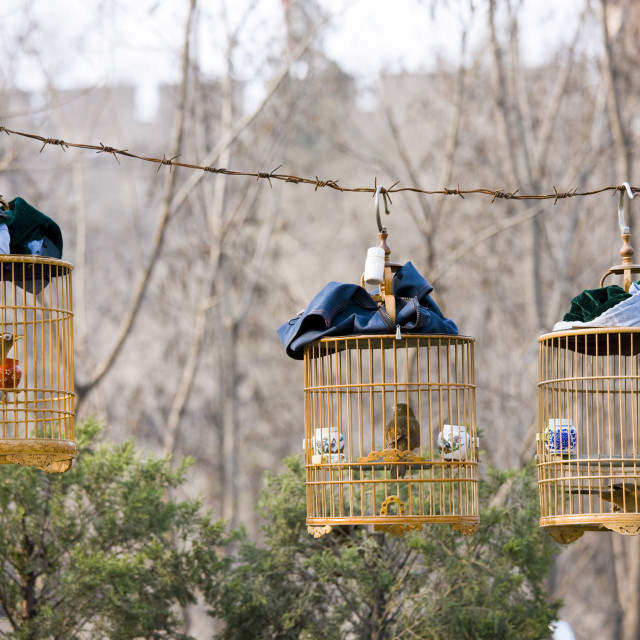 """Laughing Thrushes hang in cages in a park, central Xian, China"" stock image"
