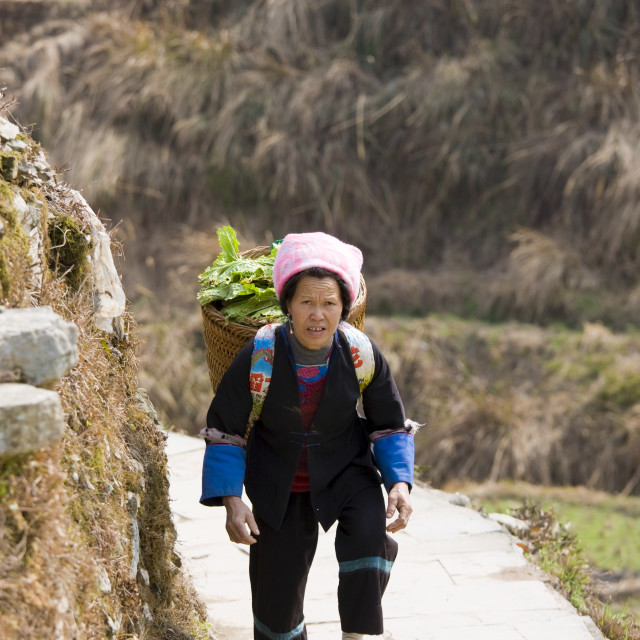 """Woman carrying vegetables in pannier basket by mountian village of Ping An,..."" stock image"