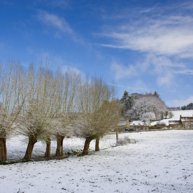"""""""Snow on pollarded Willow trees at Swinbrook in Oxfordshire, England, United..."""" stock image"""